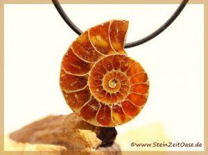 Ammonit mit Spiralsignatur gebohrt
